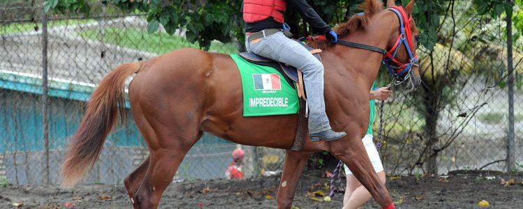 impredecible_mexico